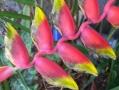 Barwy jesieni w ogrodzie