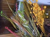 Żbła trawy lub zboże w kolorach