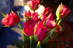 Róże cięte z Polski
