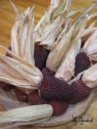Kolby kukurydzy ozdobnej