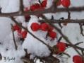 Zima w wielu odsłonach