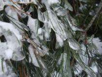 oznaki zimy niekoniecznie korzystne dla roślin