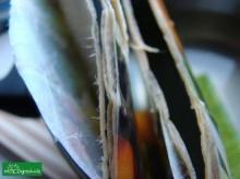 Papier latwo się rozwarstwia w mokrym kartonie