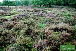 Mieć taki ekologiczny ogród?