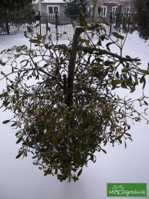 Zima przyjdzie szybciej niż przypuszczasz :-)