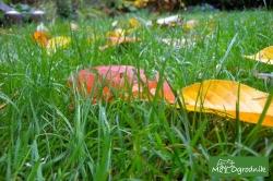 Kawałek zaniedbanego trawnika oazą spokoju