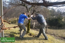 Nie wycinaj drzew w ogrodzie