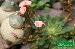 Efektowne ozdoby tworzą klimat ogrodu