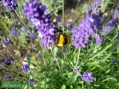 Domek dla owada: jak budować i pielęgnować