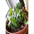 Roślinki domowe