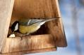 Karmnik dla ptaków na początek zimy
