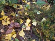 Okrywa z liści
