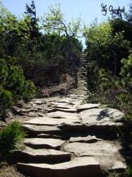 Ścieżka kamienna w lesie...
