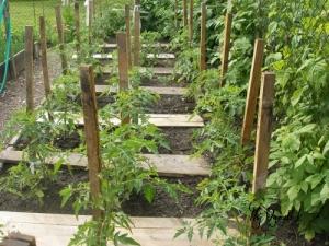 Produkcja pomidorów w warzywniaku