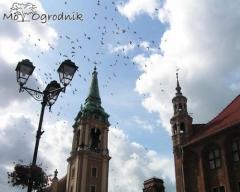 Rynek Główny w Toruniu