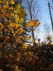 Żółty to kolor jesieni