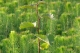 Sadzenie cebulek (1): podstawowe informacje